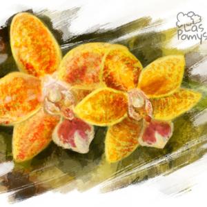 Żółty phalaenopsis